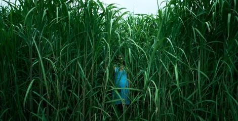 tall-grass